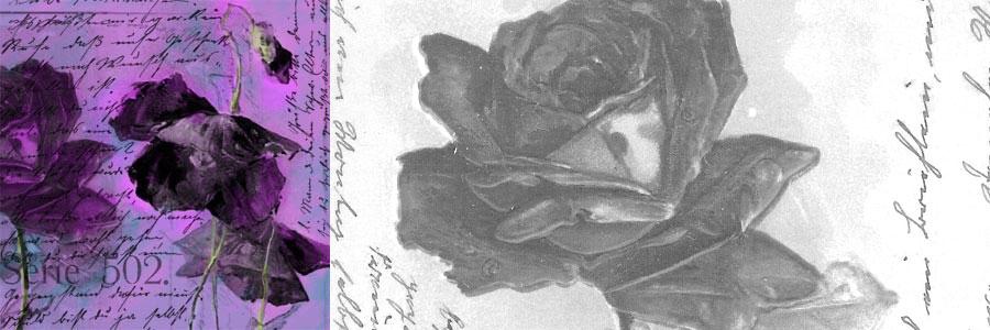 Catherine Klein Postcards Brushes